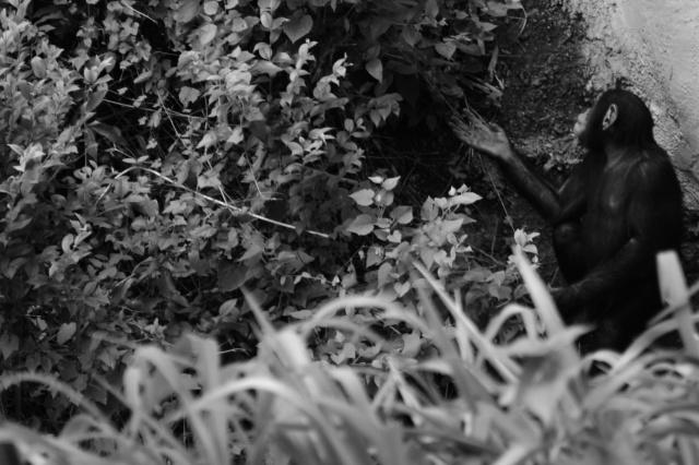DSC_0278 _Snapseed